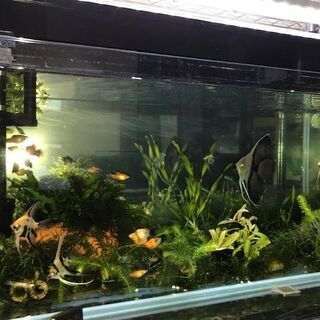 ジェックス グランデ900 上部式フィルター 90cm水槽 熱帯魚・水草用の画像