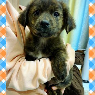 生後3ヶ月位の子犬 🌸里親様募集🌸