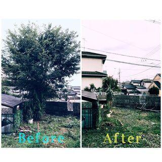 庭木の剪定・除去 除草承ります!