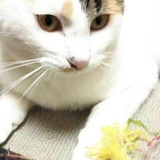スマートな美猫さん