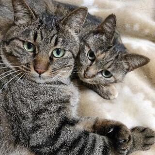 親猫2匹の里親募集(一旦、募集停止)