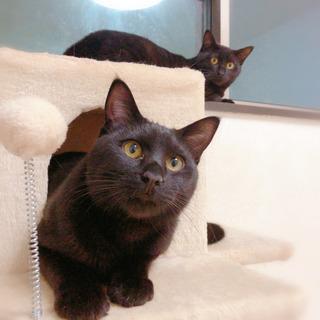 甘えん坊の黒猫(※去勢手術済)