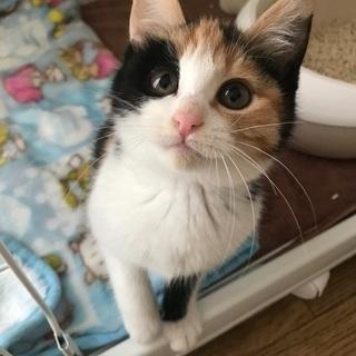 可愛い三毛猫ちゃん!