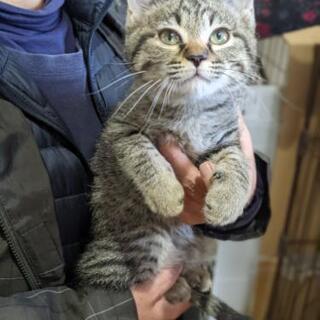 (画像更新しました)生後2ヶ月〜3ヶ月の子猫たちの里親さんを探し...
