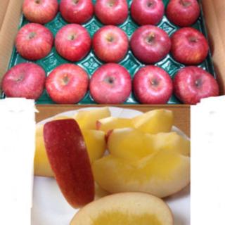 青森県産 岩木山の蜜入りリンゴ 期間限定注文販売❗️ バラ…