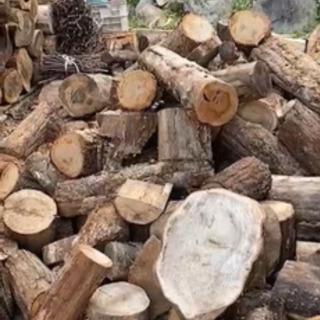 伐採木 薪 樫 クヌギ コナラ 楢 杉 桧