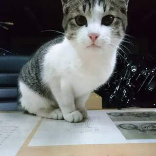 ボクちゃん☆白サバ4ヶ月男の子