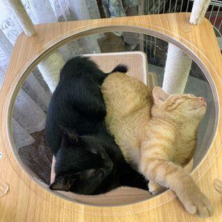 【譲渡決まりました☆】生後3ヶ月の子猫の里親募集中