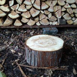 ひのきの丸太 薪割り台 中