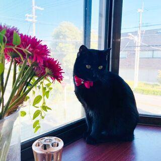 黒猫ファンにはたまらなくかわいいまわるいお目目のクーちゃん