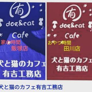 犬と猫のカフェ有吉工務店田川店・おやつの時間・終の住処・