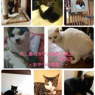 犬と猫のカフェ有吉工務店田川店・おやつの時間・終の住処・ − 福岡県