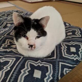 犬と猫のカフェ有吉工務店田川店・おやつの時間・終の住処・ - 地元のお店