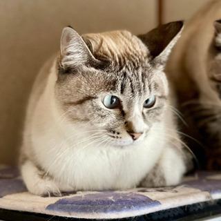 ラテくん♂ - 猫