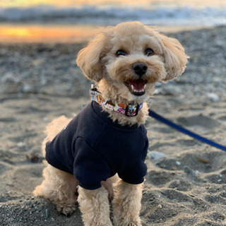【愛犬のお悩み相談お聞きします🐶】