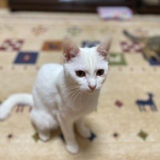 美猫さんです【1/17 ミニ譲渡会🐱】