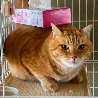 茶々丸くん♂ - 猫