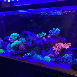 サンゴ各種 最大2万