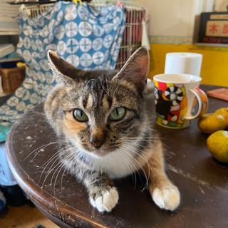 人が大好き。お膝が大好き。猫は普通にお付き合い。迷子なのか、警察...