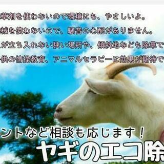 ヤギのエコ除草