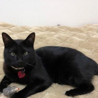 福岡県大川市/黒猫♂ちびくん探してます