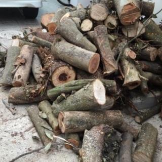 不要な木お譲りください 伐採もしますの画像