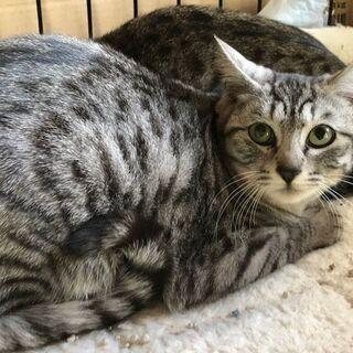 猫を幸せにする会、里親さん募集中