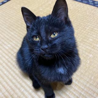 <相談中>黒猫のななちゃん