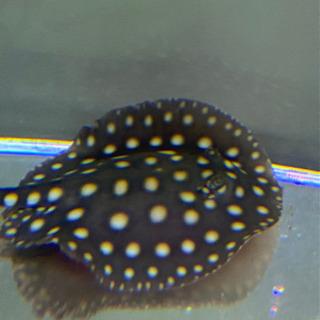 飼い切れなくなった熱帯魚 淡水魚 海水魚