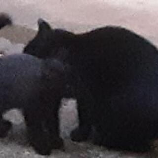 三本足だけど、元気で、可愛いい黒子猫ちゃん😺‼️