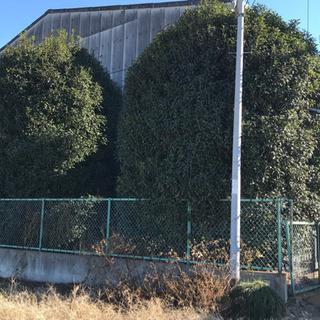 樹木の剪定、造園作業、茨城県、栃木県