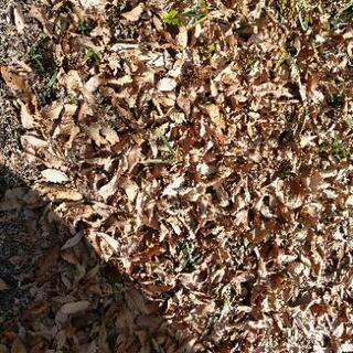 落ち葉、土いりませんか?