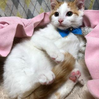 綺麗な尾長の白茶君 4ヶ月