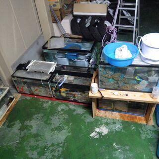 最終値下げ!水槽 金魚 コメット 鯉 引き続き飼っていただける方