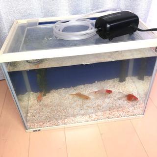 金魚水槽 一式 そのまま