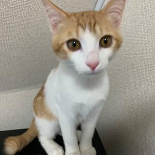 【募集】保護猫カフェ、ボランティアスタッフの募集🎵