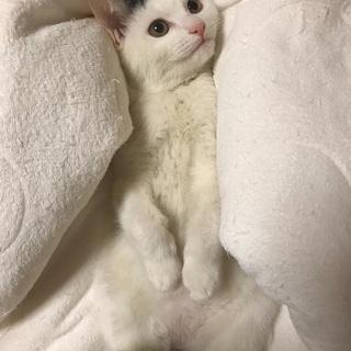 白多めの白黒子猫ちゃん!