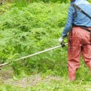 草刈りシーズン到来処分はおまかせください