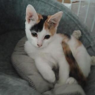 2〜3ヶ月の子猫です!