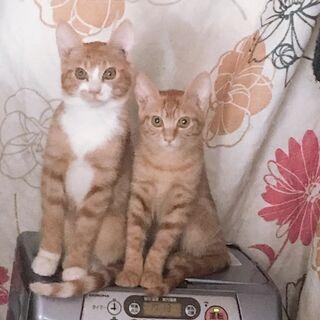 4ヶ月の子猫、里親募集します!