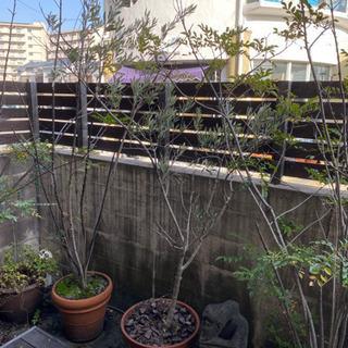 オリーブの木など 各1500円