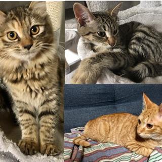 子猫3匹 里親募集 生後約5ヶ月(推定)