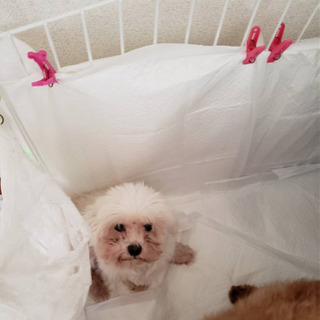 保護犬ピース君꙳★*゚