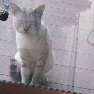 オス猫 ライちゃん