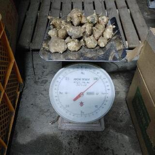 白菊芋(500g)