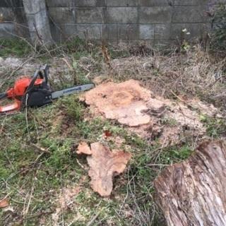 不要な木お譲りください 伐採もします - 手伝いたい/助けたい
