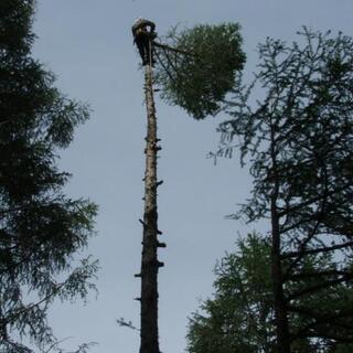 木の伐採、お庭でのお困り事 特殊伐採、造園