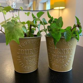 観葉植物2個セット