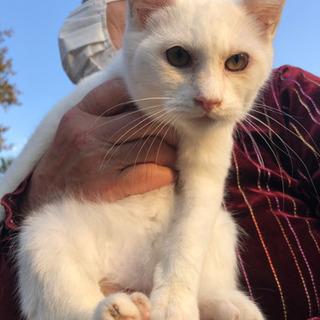5匹の白子猫たちの譲渡が決まりました!