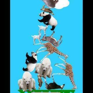 zoomで動物タワーバトル!